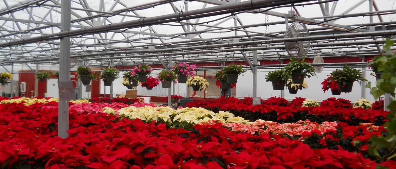 Riddle Plant Farm